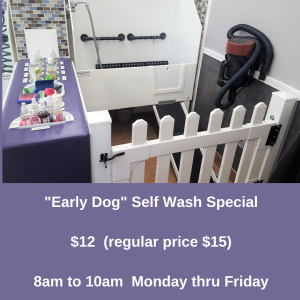Early Dog self wash Monday